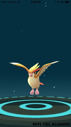 evolveintopidgeot